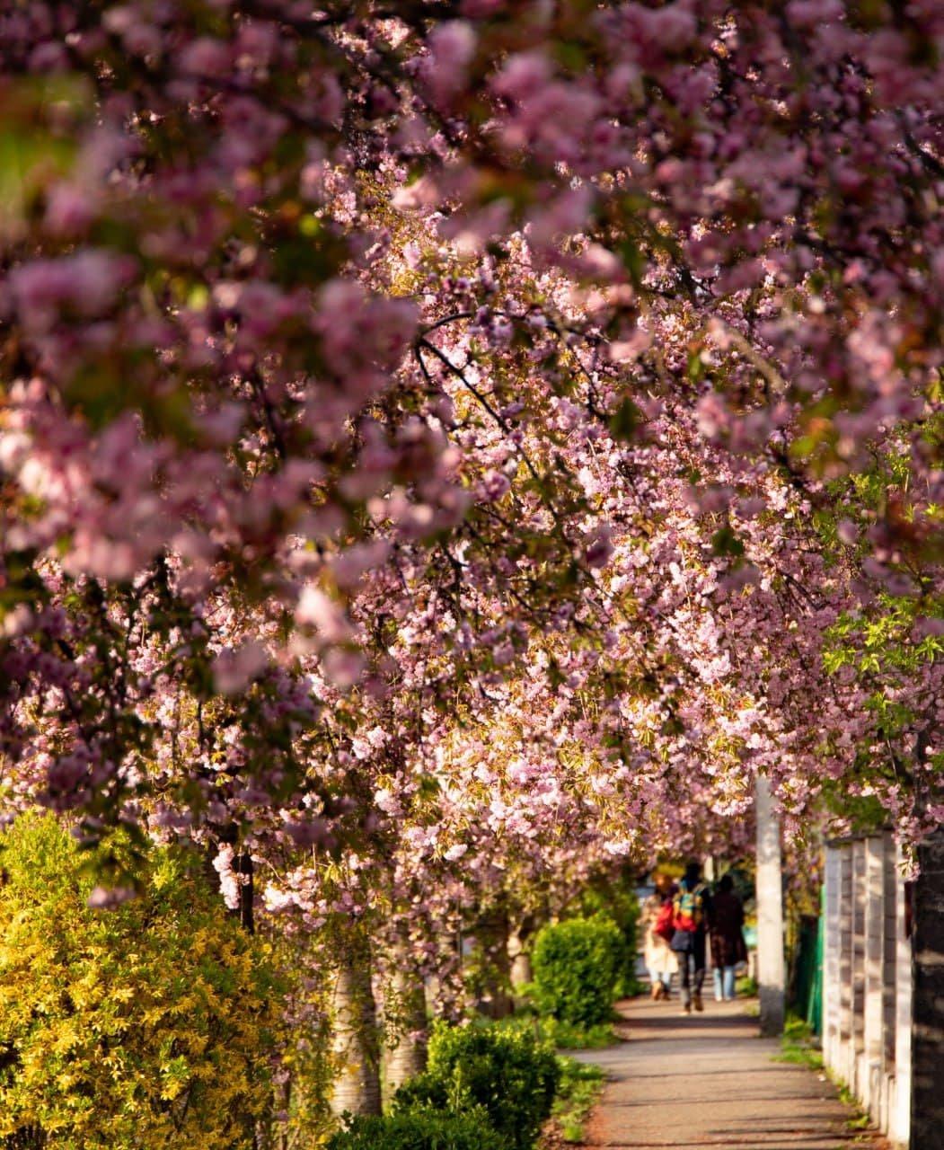 Фото дня: неймовірні світлини Ужгорода у весняній красі, фото-7