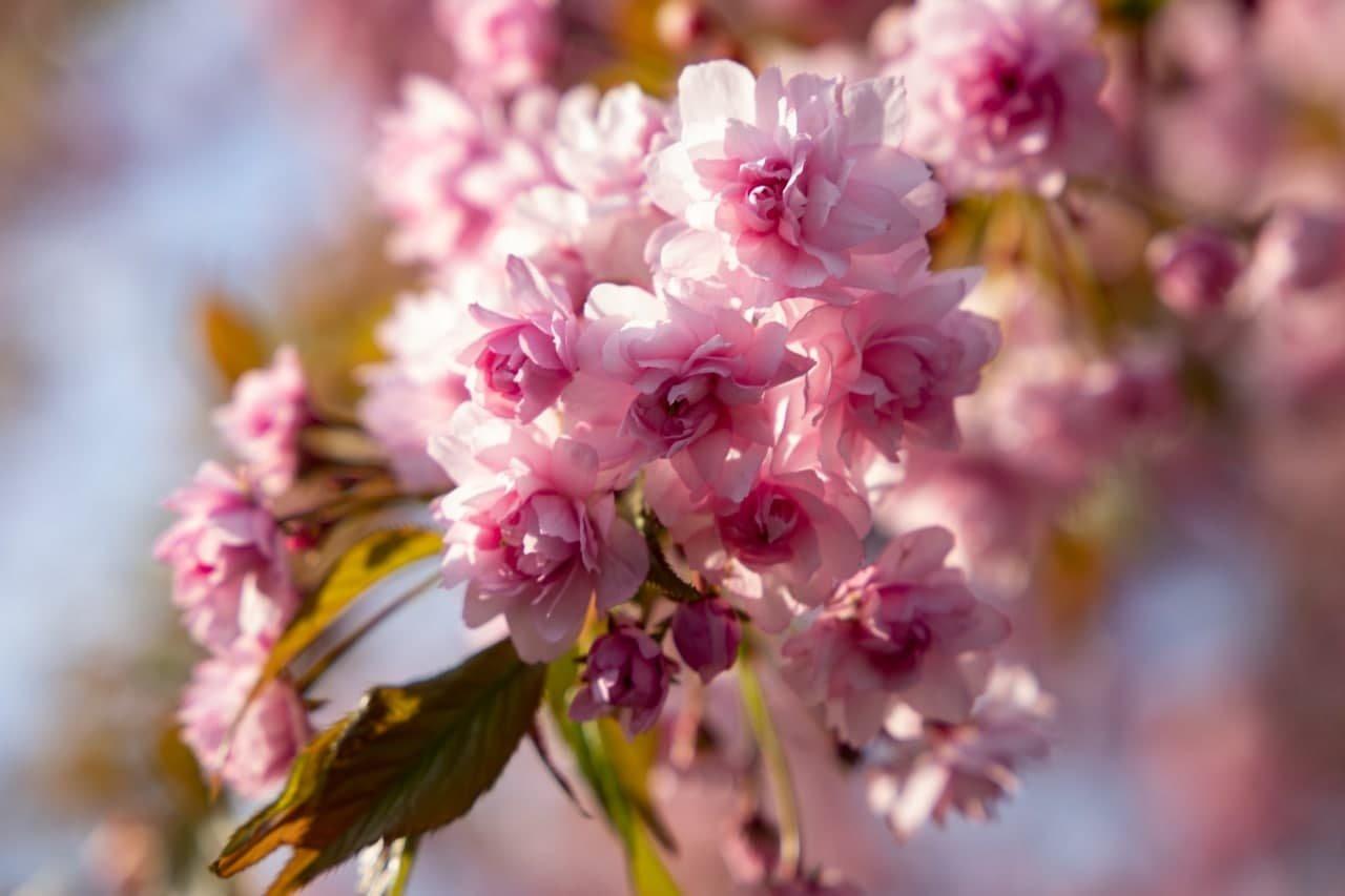 Фото дня: неймовірні світлини Ужгорода у весняній красі, фото-8