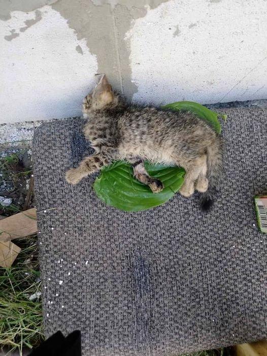 Повбивали кошенят: в Ужгороді діти познущались над тваринами (ФОТО), фото-1
