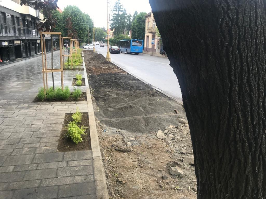 В Ужгороді під автостоянку вирубали унікальні акації (ФОТО), фото-2