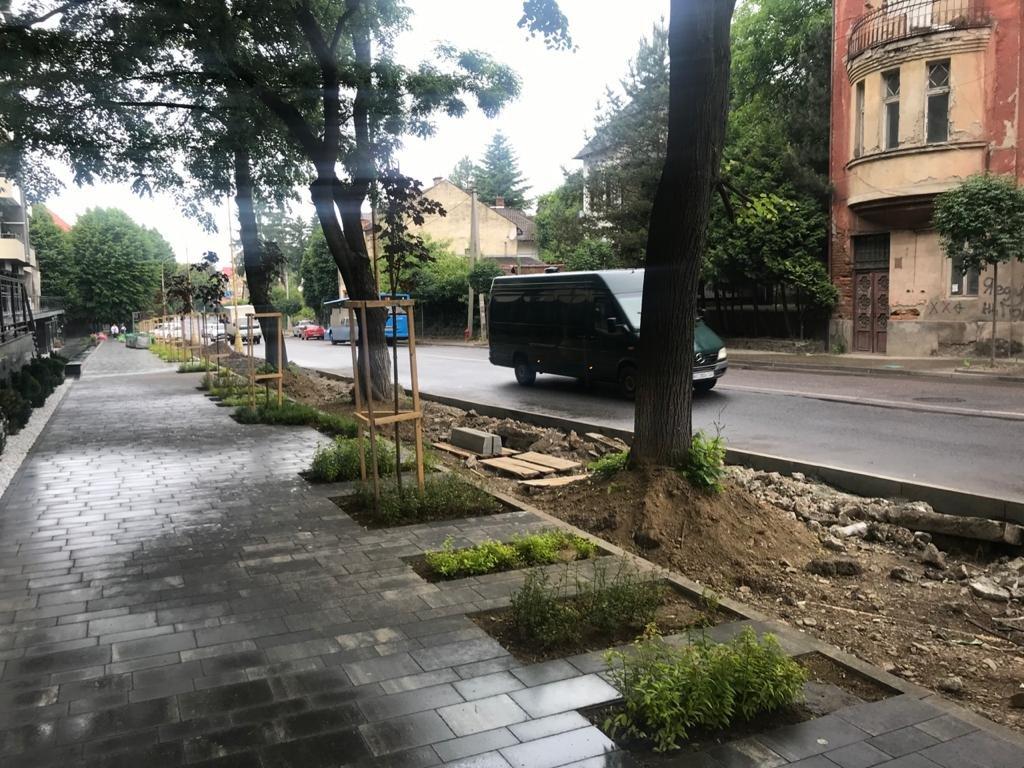 В Ужгороді під автостоянку вирубали унікальні акації (ФОТО), фото-3