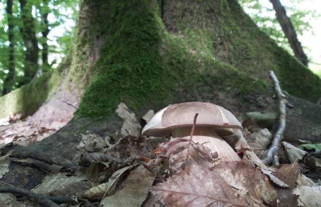 """""""Тихе полювання"""": на Закарпатті вже збирають білі гриби (ФОТО), фото-3"""